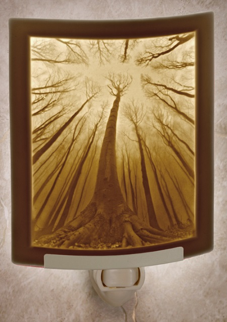 Forest of Dreams Nightlight